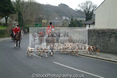 huntsmen hounds riding helston christmas hunt fox hunting blood banned sports sporting uk cornwall cornish england english great britain united kingdom british