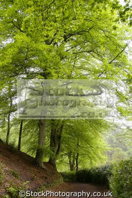dimmingsdale staffordshire moorlands. moorland countryside rural environmental uk trees hedgerow churnet valley churnett river embankment staffs england english great britain united kingdom british