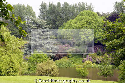 consall hall landscape gardens uk parks environmental lake rhododendrons azaleas fir staffordshire staffs england english great britain united kingdom british