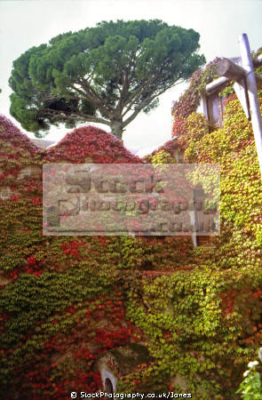 virginia creeper villa rufolo ravello. southern italy italian european travel campania neopolitan napoli naples amalfi coast italien italia italie europe