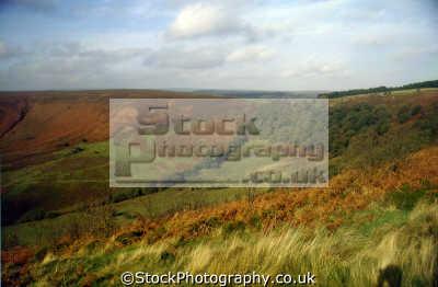 hole horcum north yorkshire moors uk moorland countryside rural environmental heather bracken peat grazing sheep england english great britain united kingdom british