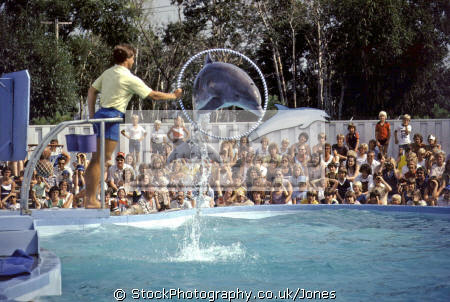 performing dolphin minneapolis valley fair. animals animalia natural history nature misc. porpoise mammal water clever acrobatic hoop minnesota usa united states america american