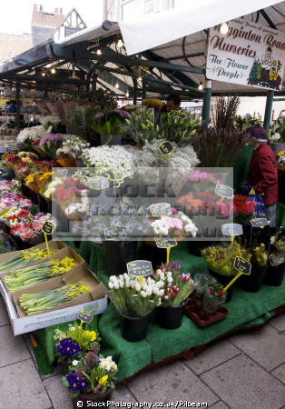 old lady buying flowers flower stall market york north east england northeast english uk bunches display town yorkshire great britain united kingdom british