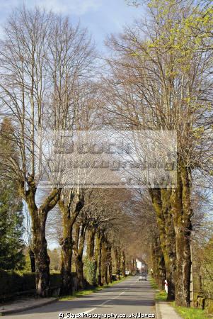 traditional avenue trees taken near gorges-de-la-truyere gorges de la truyere gorgesdelatruyere aveyron france. french landscapes european travel napoleon boneparte midi-pyrenees midi pyrenees midipyrenees auvergne lot france la francia frankreich europe