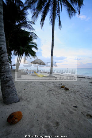 taken cayo le visa cuba. seascapes scenery scenic underwater marine diving beach palm trees cuba tropical island caribbean oceans cuban