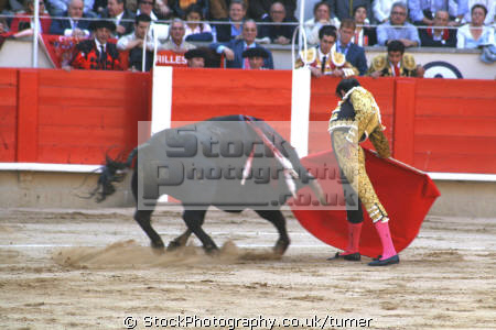 taken barcelona bull fight. indiginous people african travel fight fighting spain ring animal spanien españa espagne la spagna europe european spanish