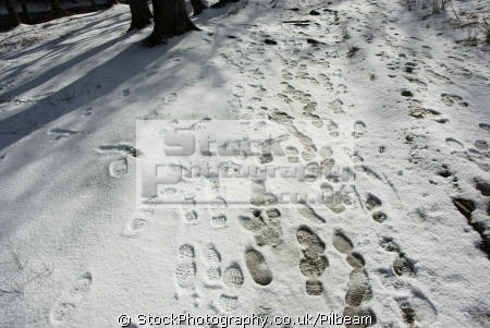 footsteps fresh snow near patterdale lake district north west northwest england english uk footprints snowy ground lots cumbria cumbrian great britain united kingdom british
