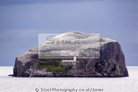 bass rock firth forth scotland seascapes scenery scenic underwater marine diving bird colony sanctuary north berwick seacliff edinburgh sandstone oliver cromwell mary queen scots central scottish scotch escocia schottland great britain united kingdom british