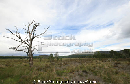 moorland near cairngorms. scotland countryside rural environmental uk cairngorms highlands islands scottish scotch scots escocia schottland great britain united kingdom british
