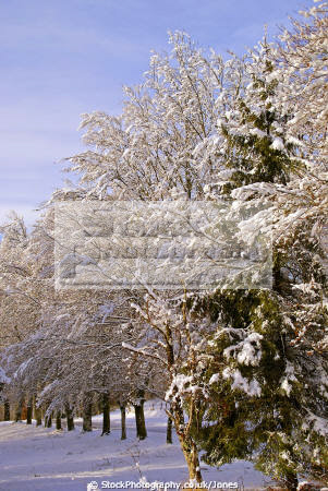 southern limousin line trees heavy snow french landscapes european travel meyrignac etang eglise corrèze correze forest france frozen la francia frankreich europe