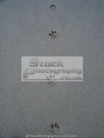 dog footprints sand misc. prints aberdeenshire scotland scottish scotch scots escocia schottland great britain united kingdom british