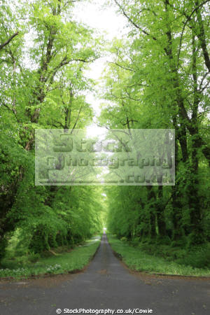 tree lined road trees wooden natural history nature misc. argyll bute argyllshire scotland scottish scotch scots escocia schottland great britain united kingdom british