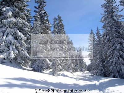 snow covered fir trees alps alpine austrian osterreich european travel blanket