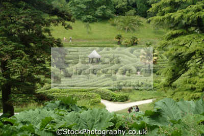 glendurgan garden giant rhubarb laurel maze uk parks gardens environmental cornwall cornish england english great britain united kingdom british