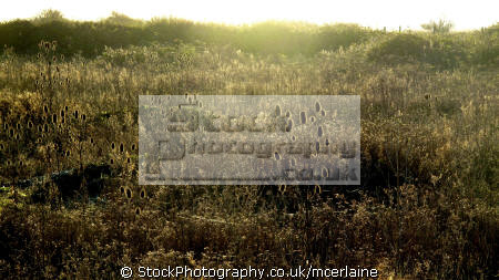 grassy field dungeness uk. wilderness natural history nature misc. grass greenery england atmospheric english great britain united kingdom british states american