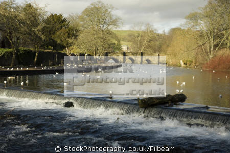 bridge weir river wye bakewell derbyshire uk towns environmental ducks tourist visit town national park peak district england english great britain united kingdom british