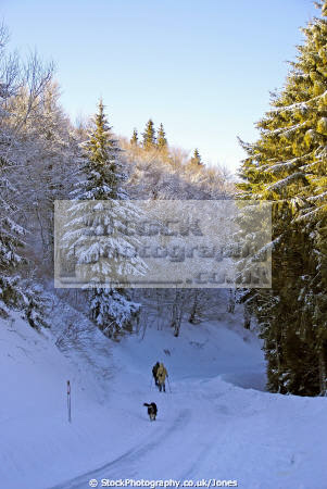 wintery landscape near lac guéry january afternoon french landscapes european travel wonderland massif central mountains volcans auvergne parc regional naturel tache capucin ferrand monts-dore monts dore montsdore snowy winter france la francia frankreich europe