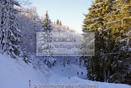 wintery scene near lac guéry january afternoon french landscapes european travel wonderland massif central mountains volcans auvergne parc regional naturel tache capucin ferrand monts-dore monts dore montsdore snowy winter france la francia frankreich europe