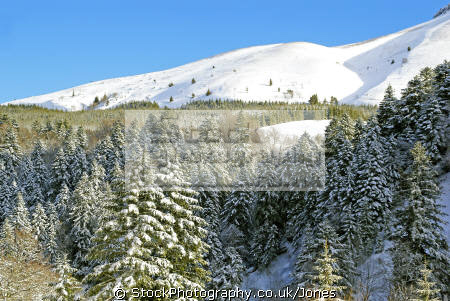 winter wonderland near col guéry france french landscapes european travel volcans auvergne parc regional naturel monts-dore monts dore montsdore snowy massif central mountains la francia frankreich europe