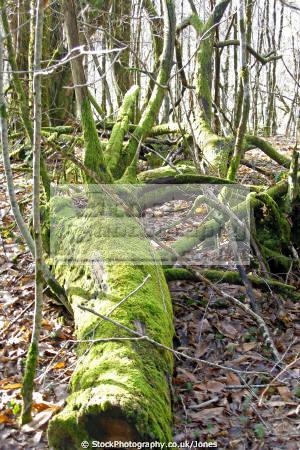 moss covered tree limousin france trees wooden natural history nature misc. decaying rotten oak woodland forest floor correze la francia frankreich europe european french