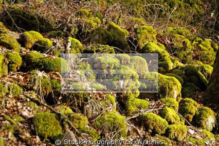 moss covered rocks grounds château sédières limousin france french châteaus european travel eyrein gare castle mansion corrèze correze sedieres chateau la francia frankreich europe