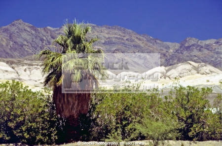 looking north-east north east northeast furnace creek california death valley desert desolate natural history nature misc. oasis hottest lowest mineral national monument californian usa united states america american