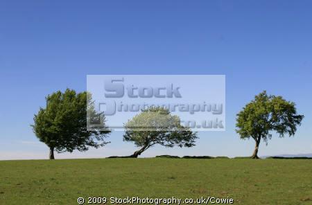 wind blown trees wooden natural history nature misc. glasgow central scotland scottish scotch scots escocia schottland great britain united kingdom british