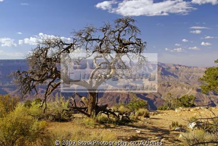grand canyon arizona desert view point south rim american yankee travel colorado usa river geology strata national park np united states america