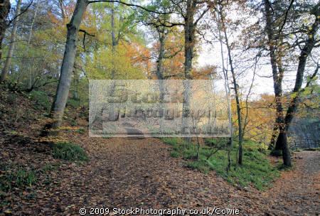 autumn trees wooden natural history nature misc. countryside winter lanarkshire scotland scottish scotch scots escocia schottland great britain united kingdom british uk grande-bretagne grande bretagne grandebretagne großbritannien gran bretagna bretaña