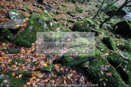 mossy rocks countryside rural environmental uk moss riverside lanarkshire scotland scottish scotch scots escocia schottland great britain united kingdom british grande-bretagne grande bretagne grandebretagne großbritannien gran bretagna bretaña