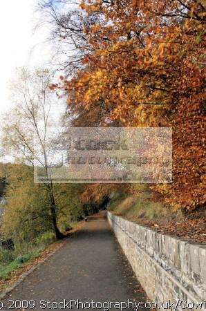 autumn walkway countryside rural environmental uk winter leaves lanarkshire scotland scottish scotch scots escocia schottland great britain united kingdom british grande-bretagne grande bretagne grandebretagne großbritannien gran bretagna bretaña