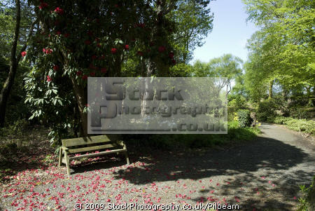 seat path rhododendron bushes flower portmeirion north wales portmerion british architecture architectural buildings uk bench relaxing sitting united kingdom