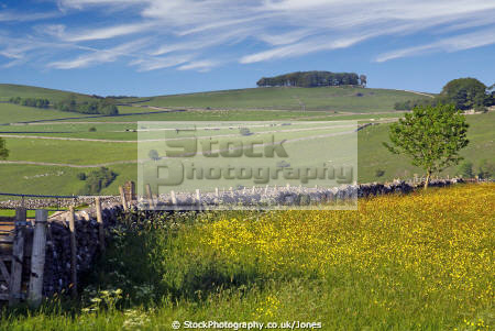 patchwork fields grazing sheep. taken derbyshire peak district uk rural britain countryside rustic pastoral environmental wildflowers national park np pasture lamb dry stone wall england english angleterre inghilterra inglaterra united kingdom british