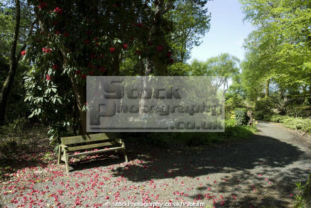 bench path park rhodedendron plant leisure flowers ground seat sitting parkland portmeirion gwynedd wales welsh país gales united kingdom british