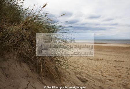 clump grass deserted beach norfolk british seaside coastal resorts leisure sand sea coast england english angleterre inghilterra inglaterra united kingdom
