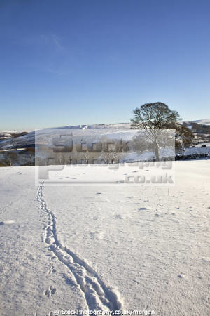 winter landscape strines sheffield south yorkshire countryside rural environmental snow fields trees reservoir dam england english angleterre inghilterra inglaterra united kingdom british