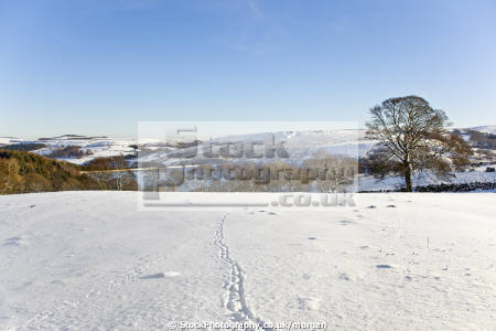 winter landscape strines sheffield south yorkshire countryside rural environmental snow scene footprints trees england english angleterre inghilterra inglaterra united kingdom british