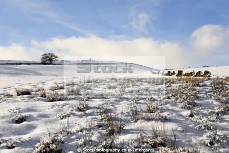 winter landscape strines sheffield south yorkshire countryside rural environmental snow scene trees fields england english angleterre inghilterra inglaterra united kingdom british