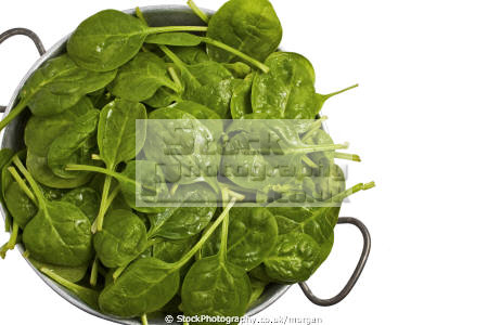 broad leaf spinach colander food nourishment nutrients abstracts fresh coking ingredients green united kingdom british
