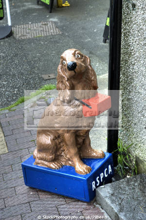 rspca dog charity collecting box outside shop dogs canidae canine animals animalia natural history nature money giving kitch quaint british odd gwynedd wales welsh país gales united kingdom
