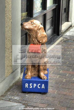 rspca dog charity collecting box outside shops dogs canidae canine animals animalia natural history nature money giving kitch quaint british odd gwynedd wales welsh país gales united kingdom