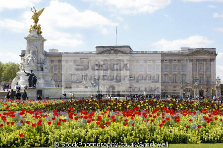 queens residence buckingham palace victoria memorial spring time tulips foreground. london royalty queen tourism famous sights capital england english cities sight-seeing sight seeing sightseeing building pall mall architecture cockney angleterre inghilterra inglaterra united kingdom british