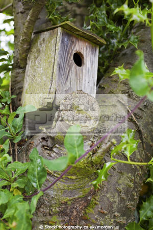 nesting box birds aves animals animalia natural history nature bird tree garden wildlifr wooden cherry sheffield yorkshire england english angleterre inghilterra inglaterra united kingdom british