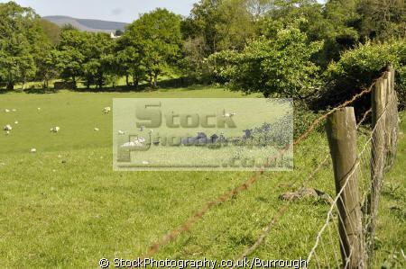 farmland stranocum rural britain countryside rustic pastoral environmental agriculture farming livestock county antrim aontroim northern ireland ulster irish irland irlanda united kingdom british