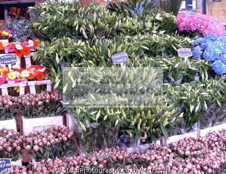 flowers neatly packed together sale street market plants plantae natural history nature amsterdam holland la hollande holanda olanda netherlands dutch