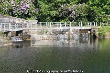 milngavie reservoir showing walkway backed large rhododendron bushes water flowing reservoir. location outside glasgow countryside rural environmental central scotland scottish scotch scots escocia schottland united kingdom british