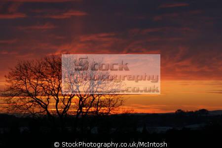 silhouetted tree left frame houses deep blue orange sky. milngavie scotland sunsets dusk sundown glasgow central scottish scotch scots escocia schottland united kingdom british
