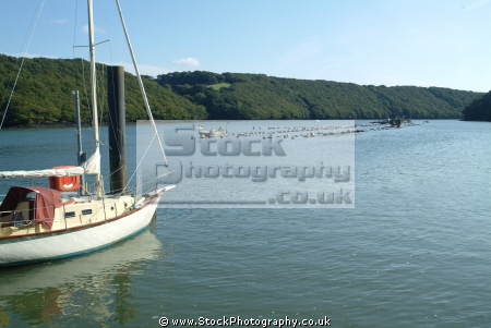 yacht moored oyster farm river fal boats marine falmouth cornwall cornish england english angleterre inghilterra inglaterra united kingdom british