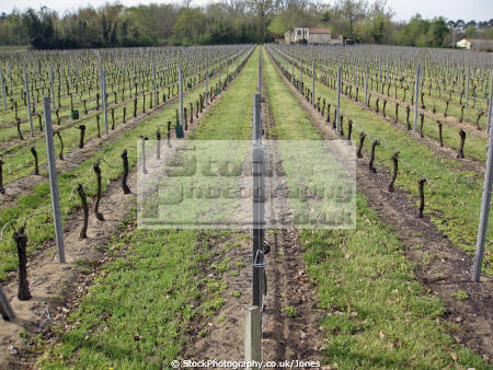 vineyards saint milion region france french ch teaus european emilion aquitaine gironde viticulture viniculture vineyard grapevine winemaking bordeaux claret grapes vignoble cabernet sauvignon franc merlot la francia frankreich