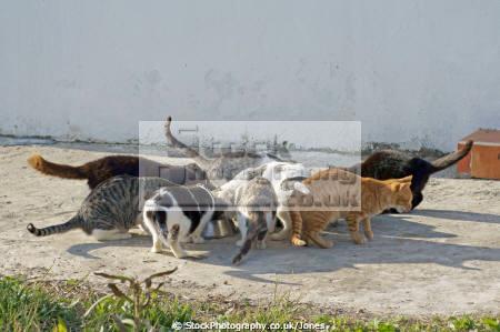 happy cats spotted near sotogrande costa del sol felidae animals animalia natural history nature spain spanish espagna andalusia estepona laga malaga moggie feline spanien espa espagne la spagna